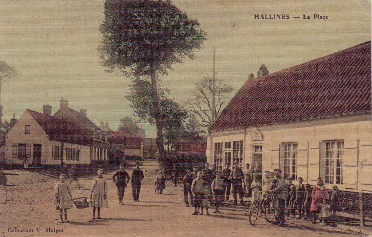 Hallines (21)